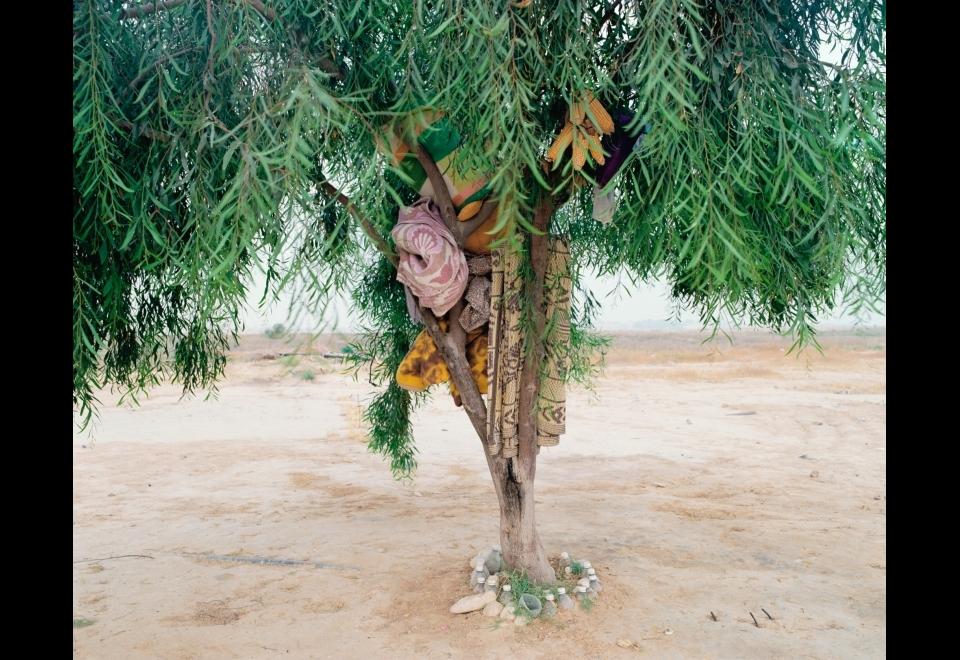 Ron Amir, <i>L'arbre de Bisharah et Anwar</i>, 2015